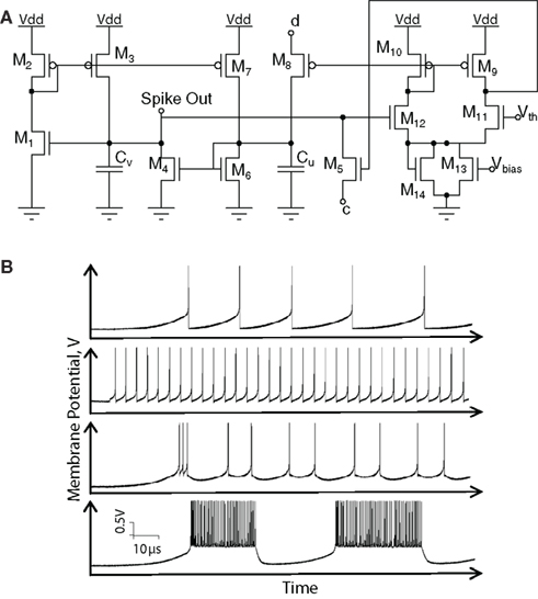Neuromorphic Silicon Neuron Circuits